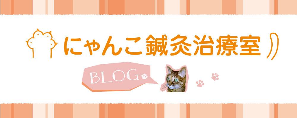 にゃんこ鍼灸治療室ブログ